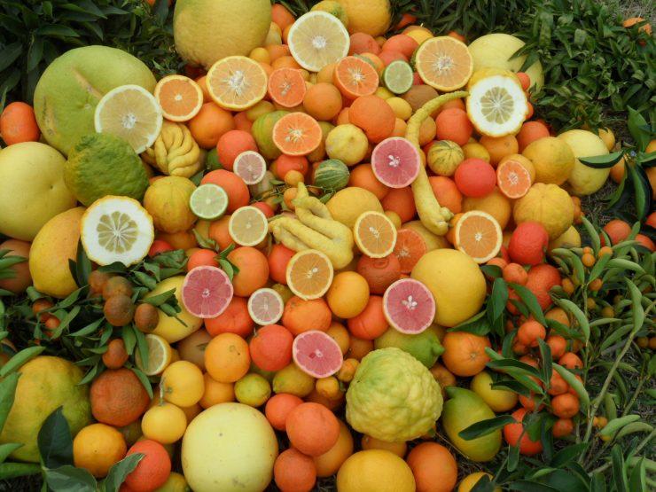 Un ensemble d'agrumes prêt à la consommation