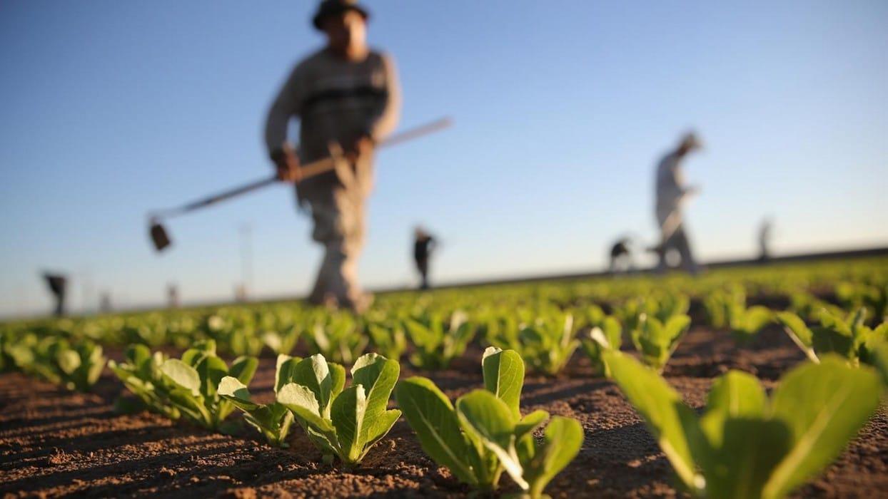 Un agriculteur en début de saison