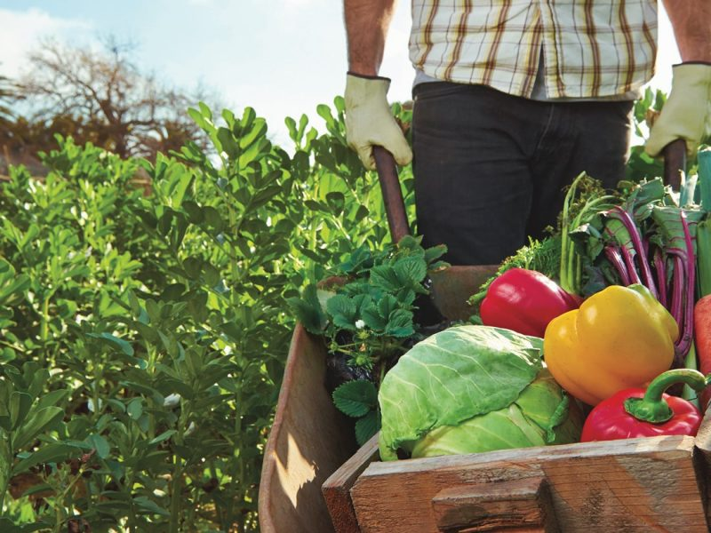 L'agriculture biologique, c'est quoi exactement ?