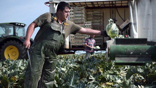 Un agriculteur en pleine récolte
