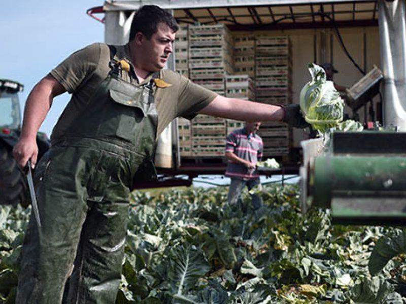 Travailler dans l'agriculture : 4 conseils de professionnels